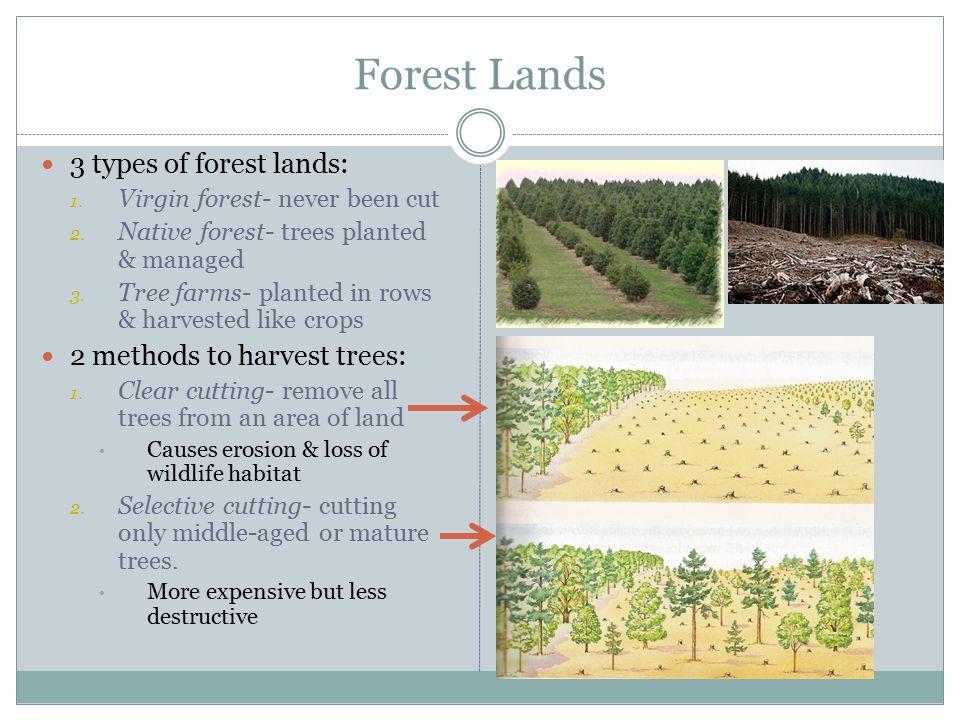 Forest Lands 3 types of forest lands: 1.Virgin forest- never been cut 2.