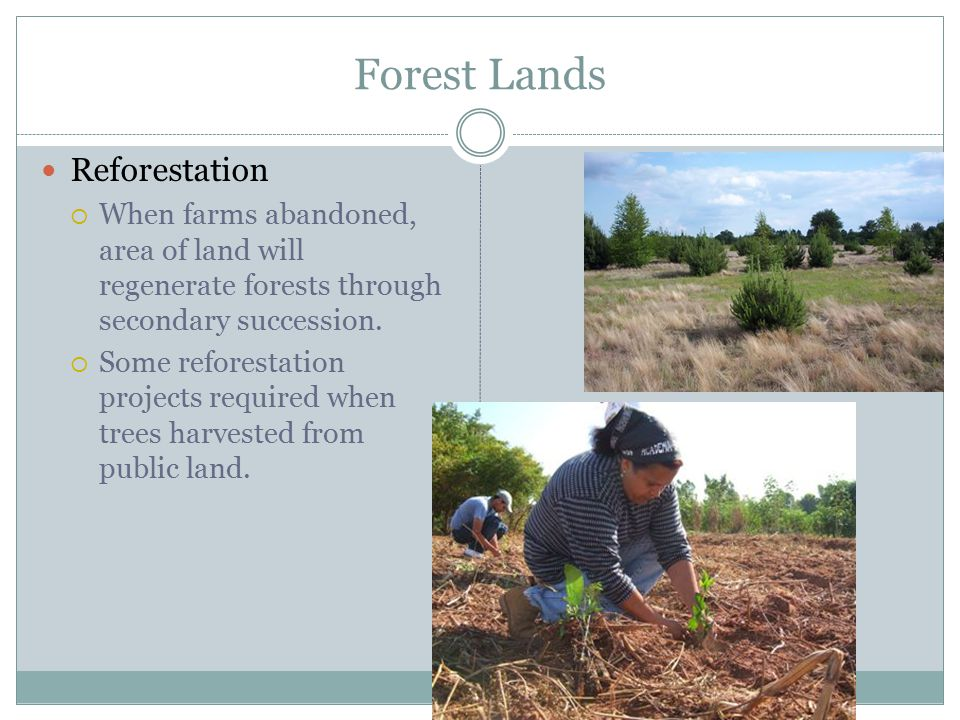 Forest Lands Reforestation  When farms abandoned, area of land will regenerate forests through secondary succession.
