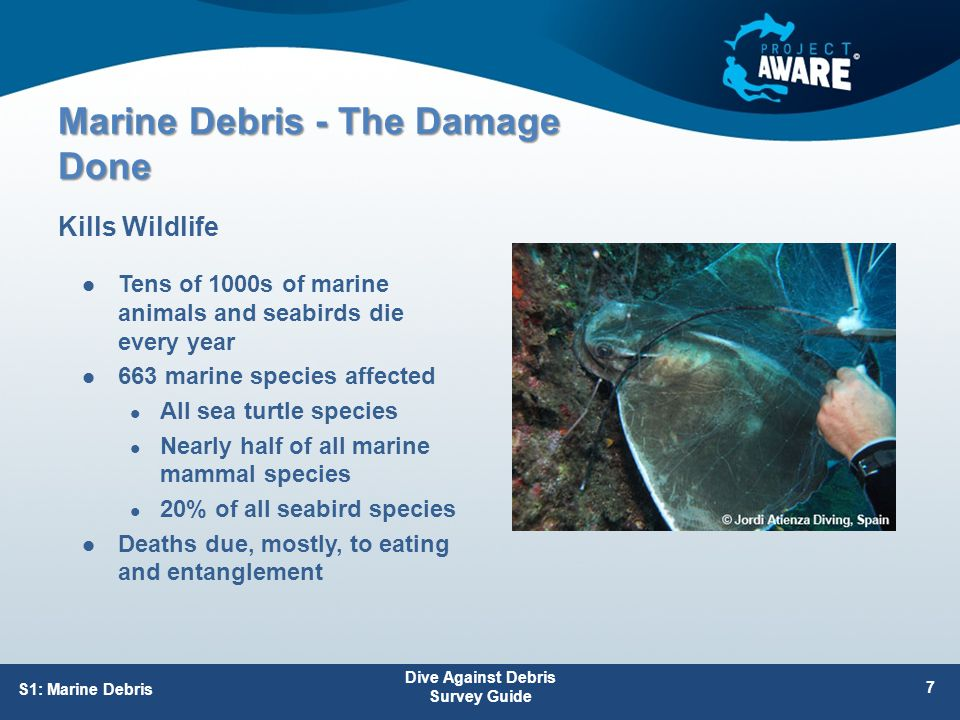 Marine Debris - The Damage Done Tens of 1000s of marine animals and seabirds die every year 663 marine species affected All sea turtle species Nearly half of all marine mammal species 20% of all seabird species Deaths due, mostly, to eating and entanglement Kills Wildlife S1: Marine Debris Dive Against Debris Survey Guide 7