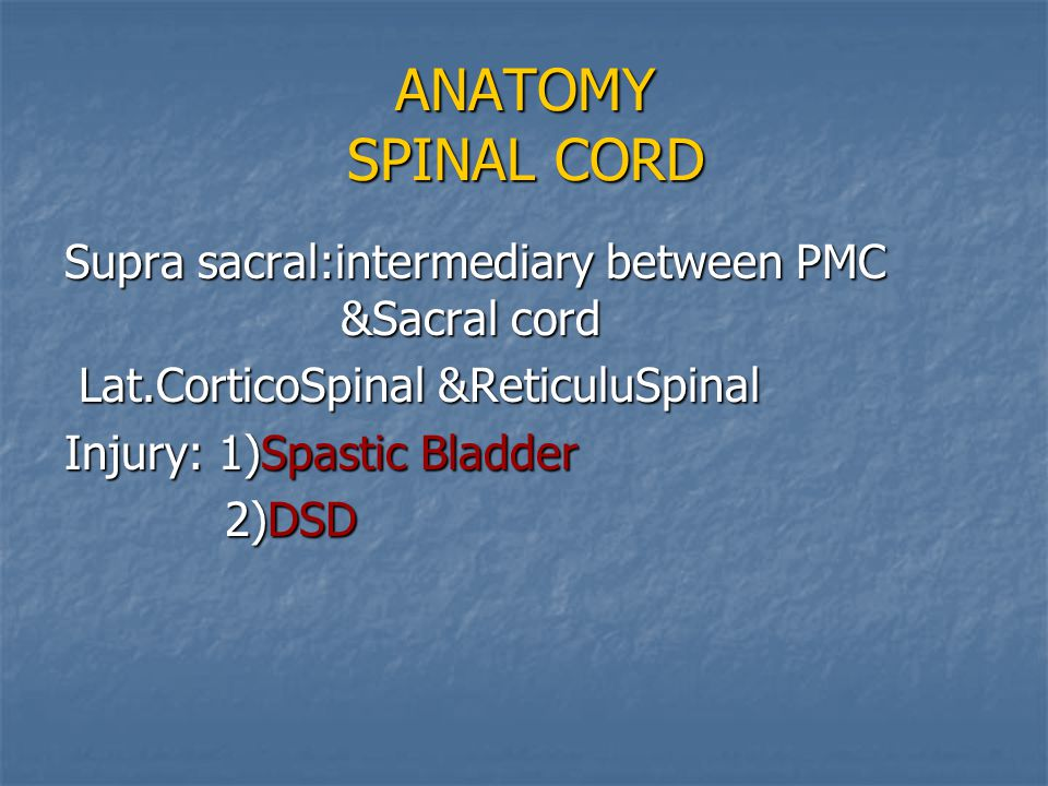 ANATOMY SPINAL CORD Supra sacral:intermediary between PMC &Sacral cord Lat.CorticoSpinal &ReticuluSpinal Lat.CorticoSpinal &ReticuluSpinal Injury: 1)S