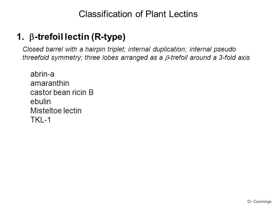 1.  -trefoil lectin (R-type) abrin-a amaranthin castor bean ricin B ebulin Misteltoe lectin TKL-1 Classification of Plant Lectins Closed barrel wit