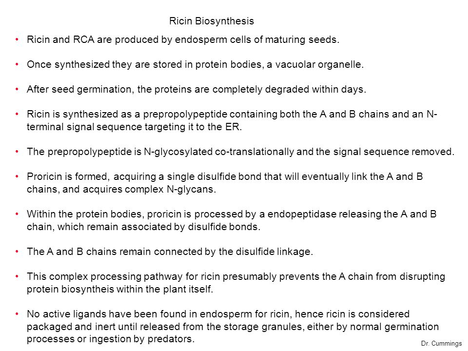 Ricin and RCA are produced by endosperm cells of maturing seeds.