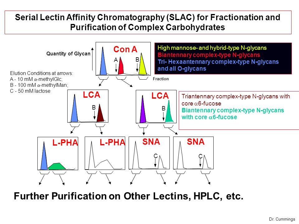Con A LCA L-PHA Fraction SNA Further Purification on Other Lectins, HPLC, etc.