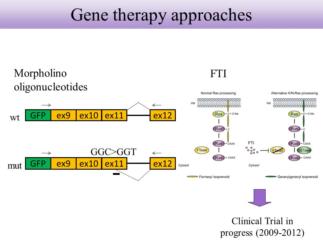 Gene therapy approaches Morpholino oligonucleotides FTI GFPex9ex10ex11ex12 wt GFPex9ex10ex11ex12 mut GGC>GGT Clinical Trial in progress (2009-2012)