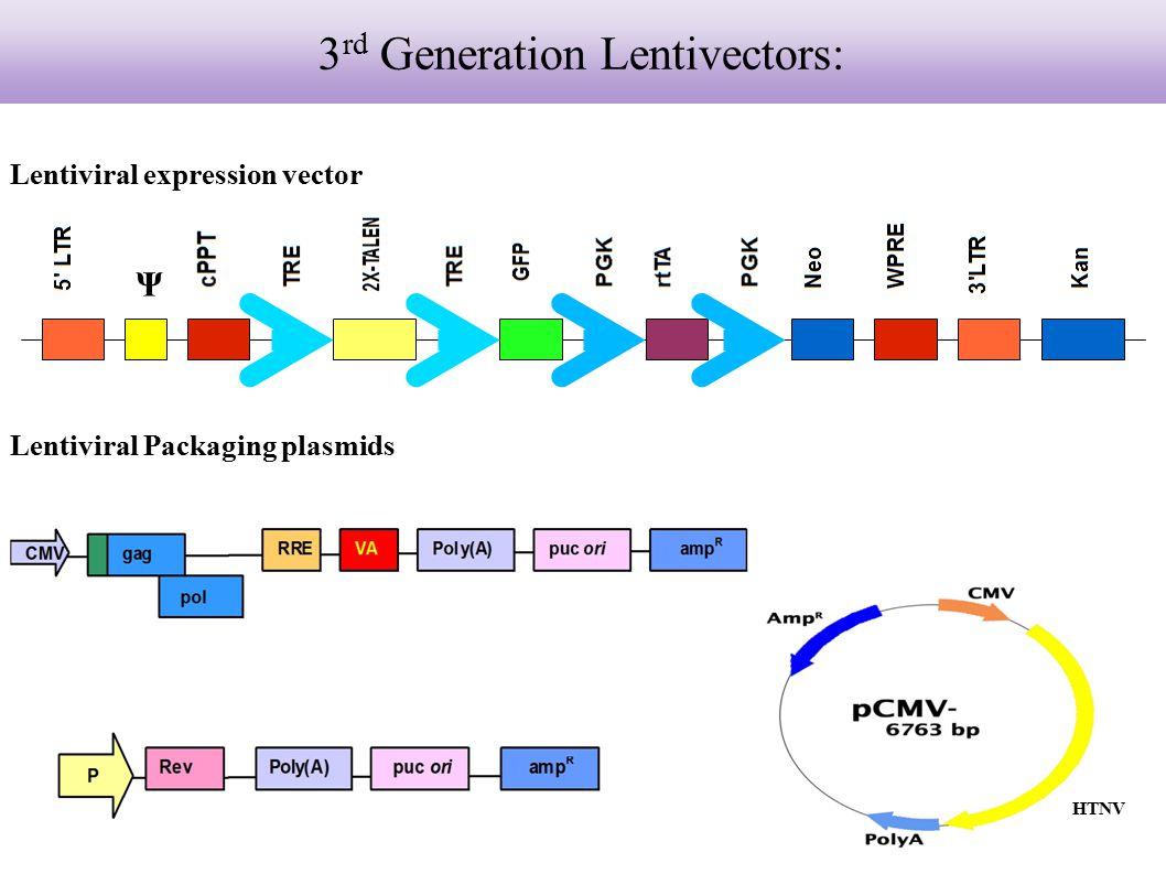 Lentiviral expression vector HTNV Lentiviral Packaging plasmids Ψ 3 rd Generation Lentivectors:
