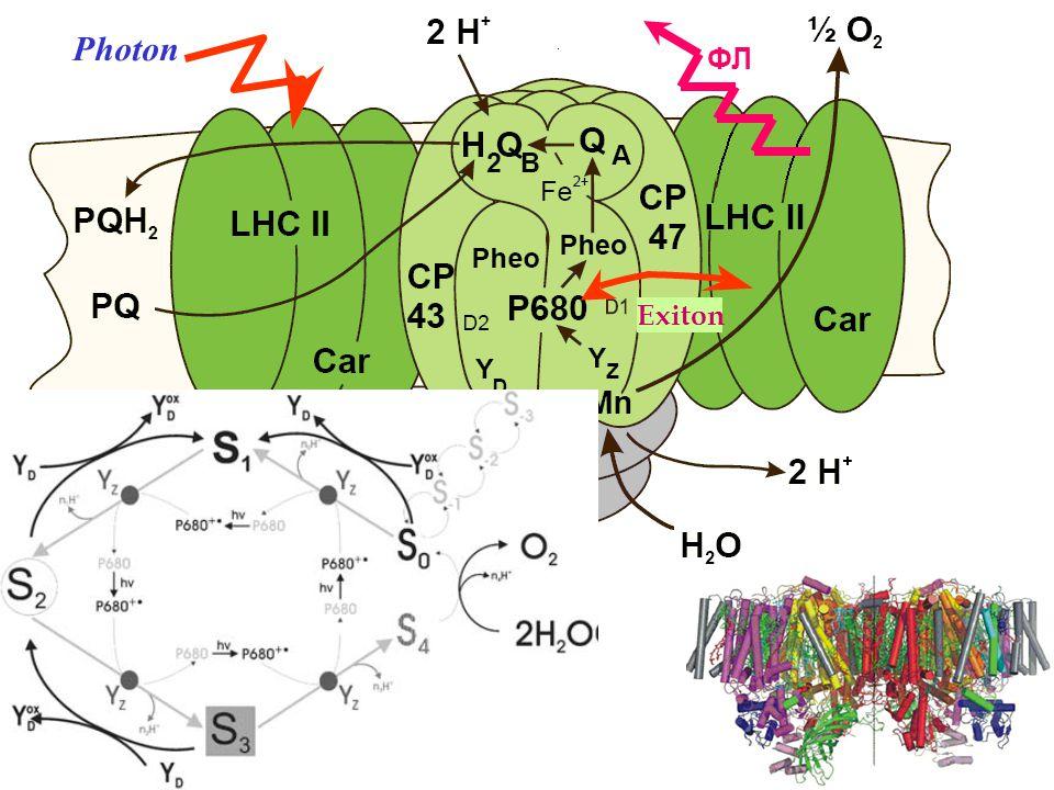 Exciton Photon ФЛ Exiton