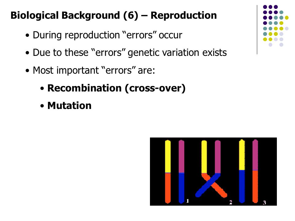 "Biological Background (6) – Reproduction During reproduction ""errors"" occur Due to these ""errors"" genetic variation exists Most important ""errors"" are"