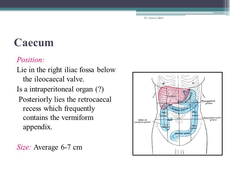 Internal plexus& External plexus: