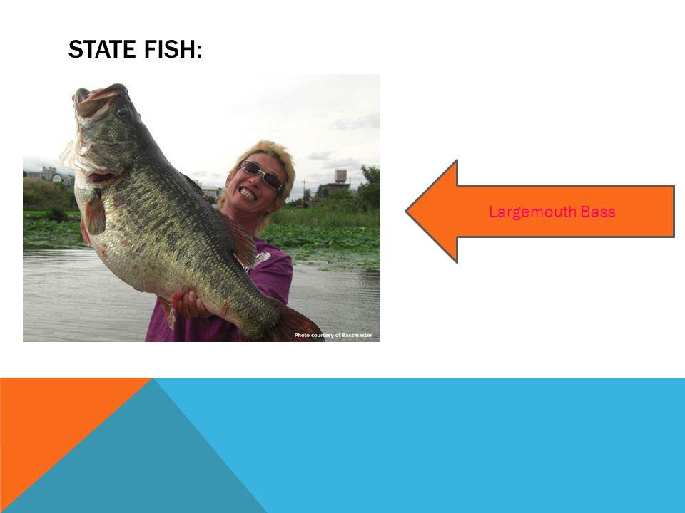 STATE FISH: Largemouth Bass