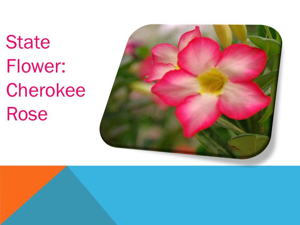 State Flower: Cherokee Rose