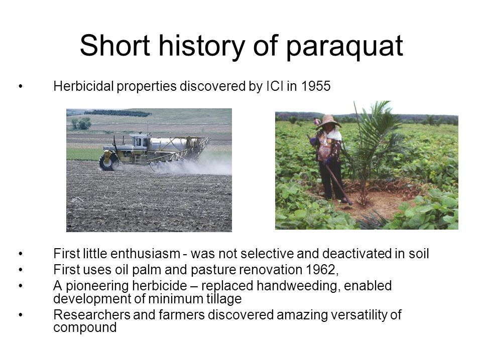 Short history of paraquat Herbicidal properties discovered by ICI in 1955 First little enthusiasm - was not selective and deactivated in soil First uses oil palm and pasture renovation 1962, A pioneering herbicide – replaced handweeding, enabled development of minimum tillage Researchers and farmers discovered amazing versatility of compound