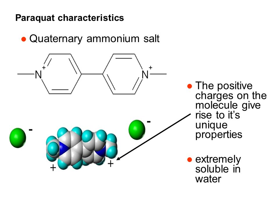 Paraquat characteristics l Quaternary ammonium salt l The positive charges on the molecule give rise to it's unique properties l extremely soluble in water