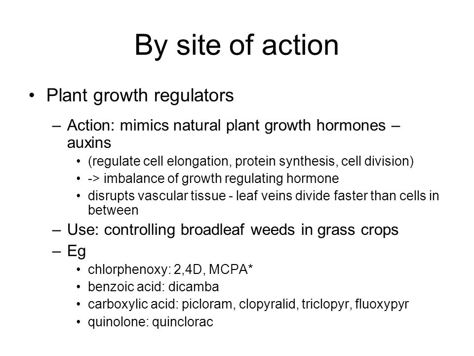 By site of action Plant growth regulators –Action: mimics natural plant growth hormones – auxins (regulate cell elongation, protein synthesis, cell division) -> imbalance of growth regulating hormone disrupts vascular tissue - leaf veins divide faster than cells in between –Use: controlling broadleaf weeds in grass crops –Eg chlorphenoxy: 2,4D, MCPA* benzoic acid: dicamba carboxylic acid: picloram, clopyralid, triclopyr, fluoxypyr quinolone: quinclorac