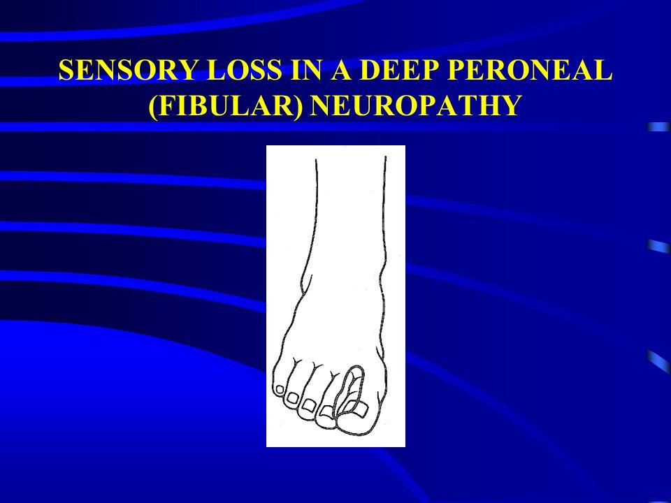 SENSORY LOSS IN A DEEP PERONEAL (FIBULAR) NEUROPATHY