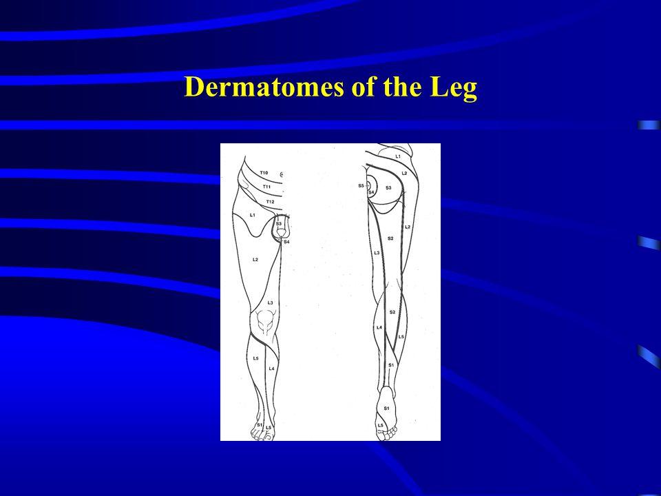 Dermatomes of the Leg