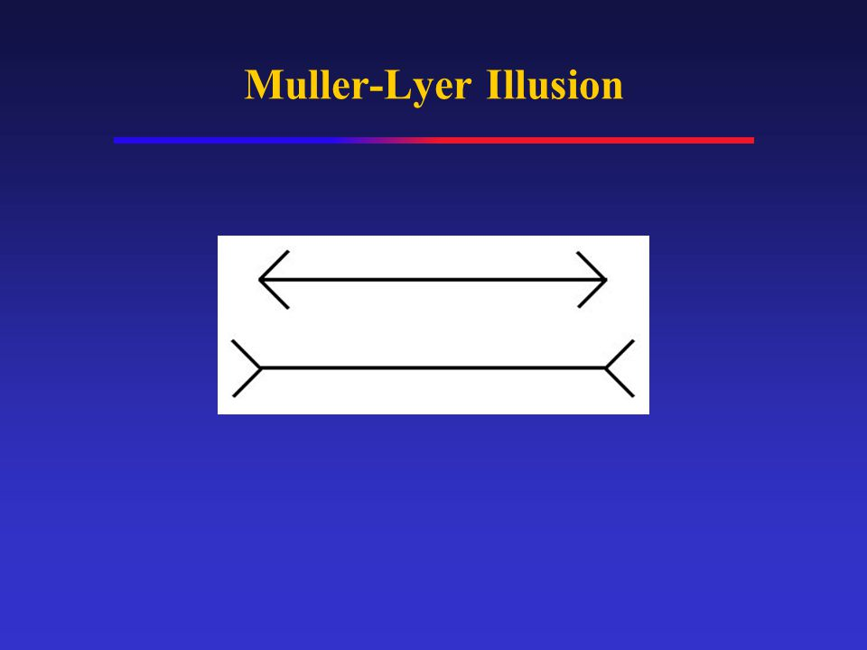 Muller-Lyer Illusion