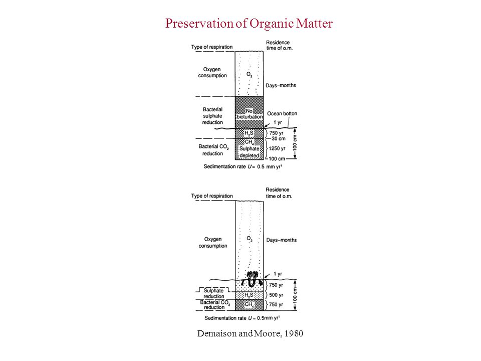 Preservation of Organic Matter Demaison and Moore, 1980
