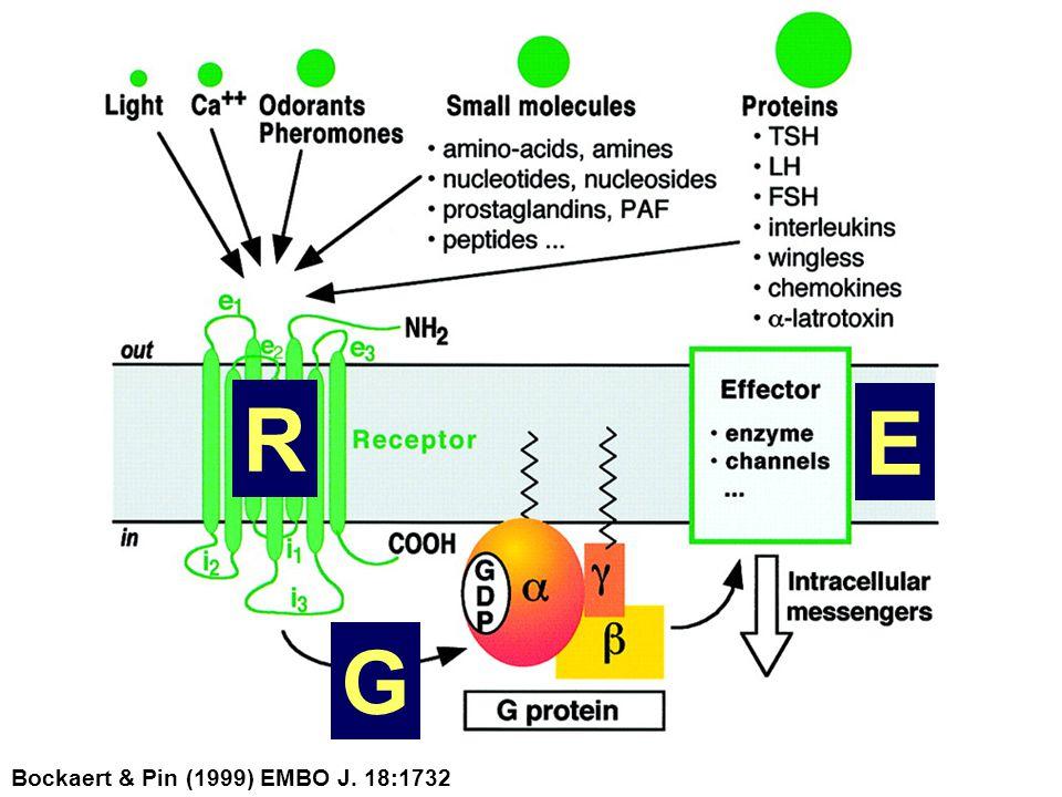 Bockaert & Pin (1999) EMBO J. 18:1732 R G E