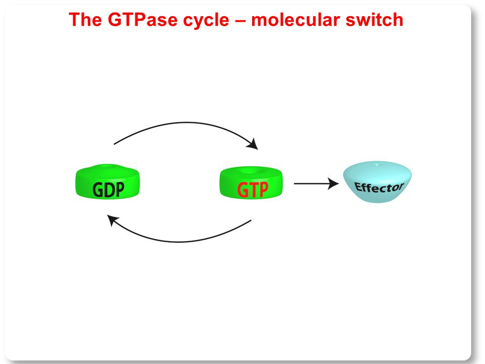The GTPase cycle – molecular switch