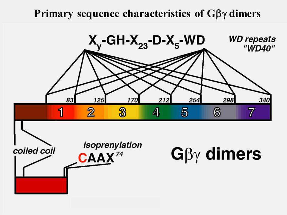 Primary sequence characteristics of G  dimers