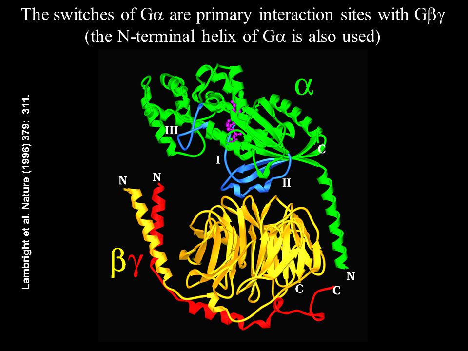 The switches of G  are primary interaction sites with G  (the N-terminal helix of G  is also used) Lambright et al.