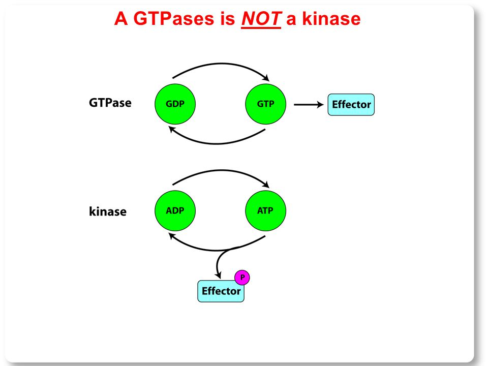 A GTPases is NOT a kinase
