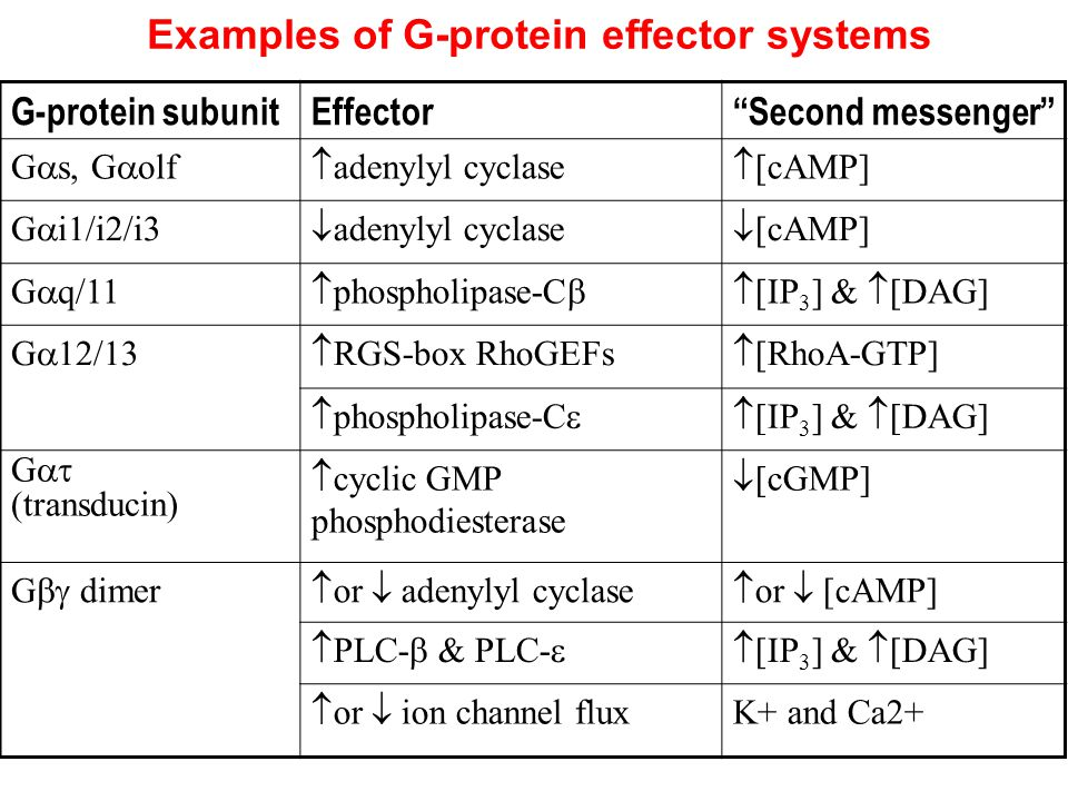 Examples of G-protein effector systems G-protein subunitEffector Second messenger G  s, G  olf  adenylyl cyclase  [cAMP] G  i1/i2/i3  adenylyl cyclase  [cAMP] G  q/11  phospholipase-C  [IP 3 ] &  [DAG] G  12/13  RGS-box RhoGEFs  [RhoA-GTP]  phospholipase-C  [IP 3 ] &  [DAG] G  (transducin)  cyclic GMP phosphodiesterase  [cGMP] G  dimer  or  adenylyl cyclase  or  [cAMP]  PLC-  PLC-  [IP 3 ] &  [DAG]  or  ion channel flux K+ and Ca2+