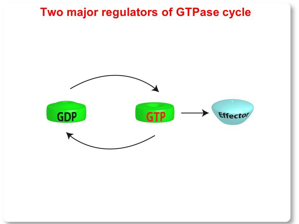 Two major regulators of GTPase cycle