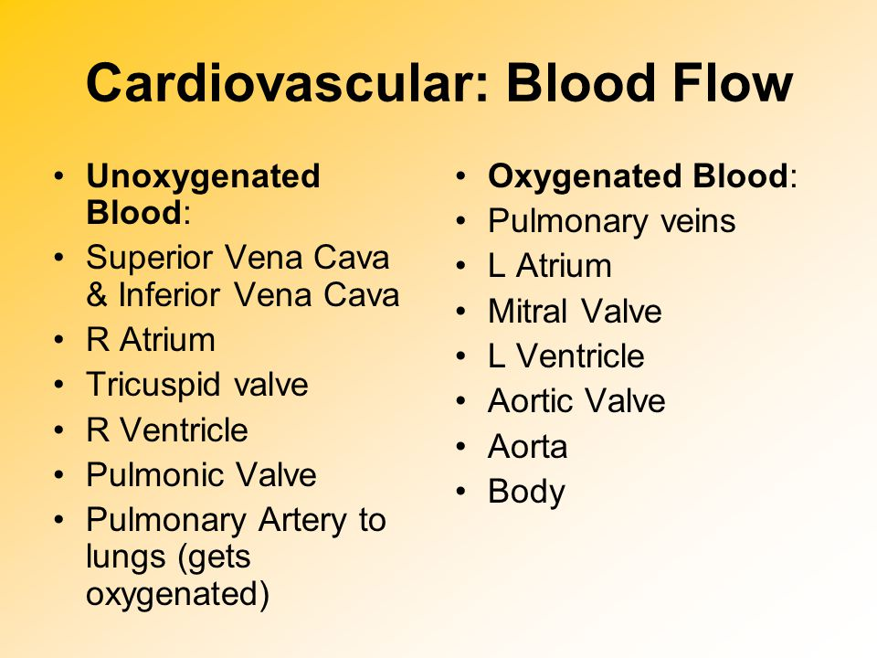 Cardiovascular: Blood SUPPLY There are two main coronary arteries, the left (LCA) and the right (RCA) Coronary artery blood flow to the myocardium occurs primarily during diastole, when coronary vascular resistance is minimized.