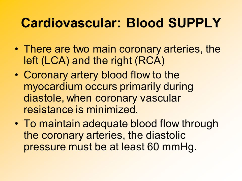 Cardiovascular: Blood SUPPLY There are two main coronary arteries, the left (LCA) and the right (RCA) Coronary artery blood flow to the myocardium occ
