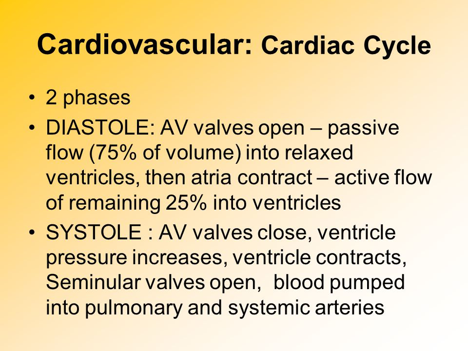 Cardiovascular: Heart Sounds Heart sounds: lub dub SYSTOLE: lub= S1 (closing of AV valves) DIASTOLE: dub = S2 (closing of semilunar valves) During the cardiac cycle, valves are opening and closing, causing different heart sounds (S1 and S2).