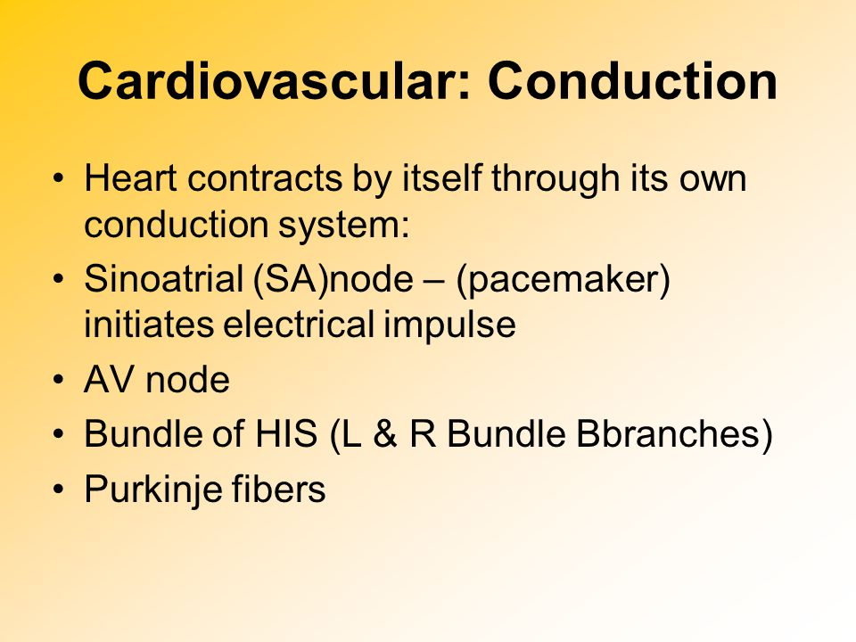 Cardiovascular: Conduction Heart contracts by itself through its own conduction system: Sinoatrial (SA)node – (pacemaker) initiates electrical impulse