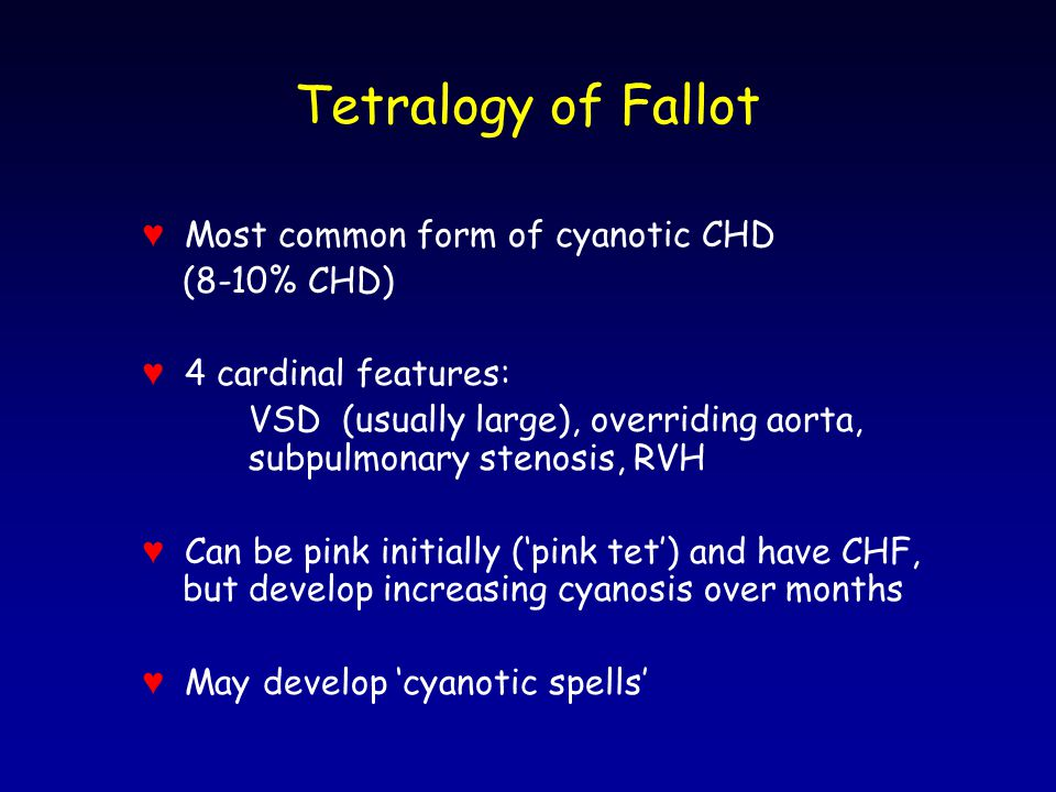 Tetralogy of Fallot ♥ Most common form of cyanotic CHD (8-10% CHD) ♥ 4 cardinal features: VSD (usually large), overriding aorta, subpulmonary stenosis, RVH ♥ Can be pink initially ('pink tet') and have CHF, but develop increasing cyanosis over months ♥ May develop 'cyanotic spells'