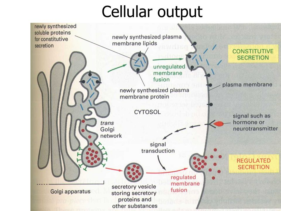 Cellular output