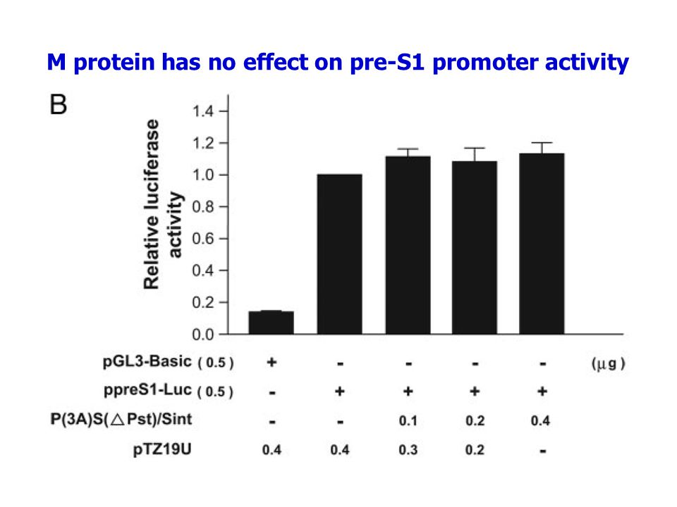 M protein has no effect on pre-S1 promoter activity