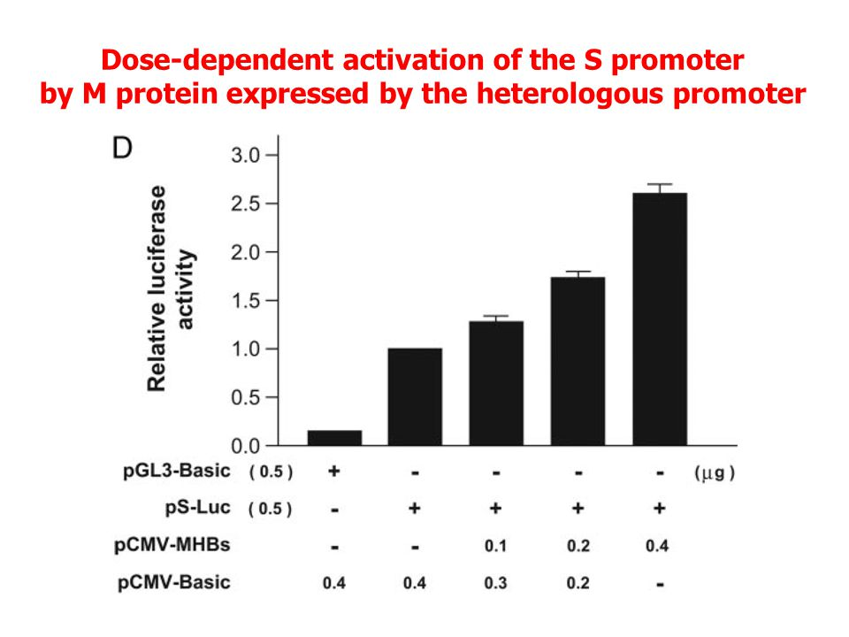 Dose-dependent activation of the S promoter by M protein expressed by the heterologous promoter