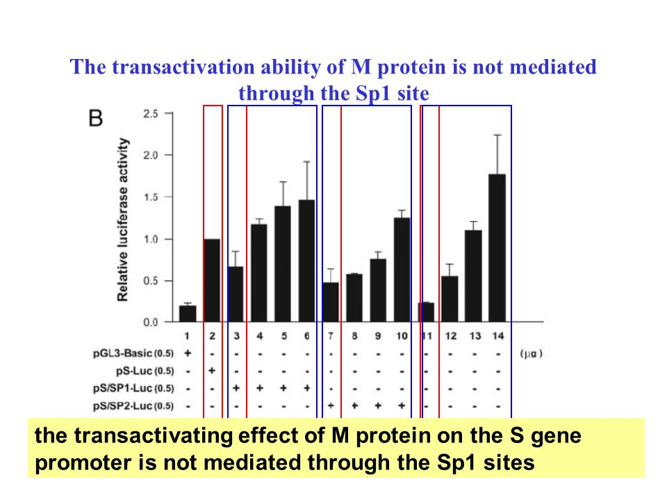 The transactivation ability of M protein is not mediated through the Sp1 site the transactivating effect of M protein on the S gene promoter is not me