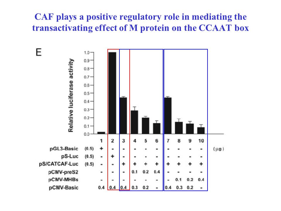 CAF plays a positive regulatory role in mediating the transactivating effect of M protein on the CCAAT box