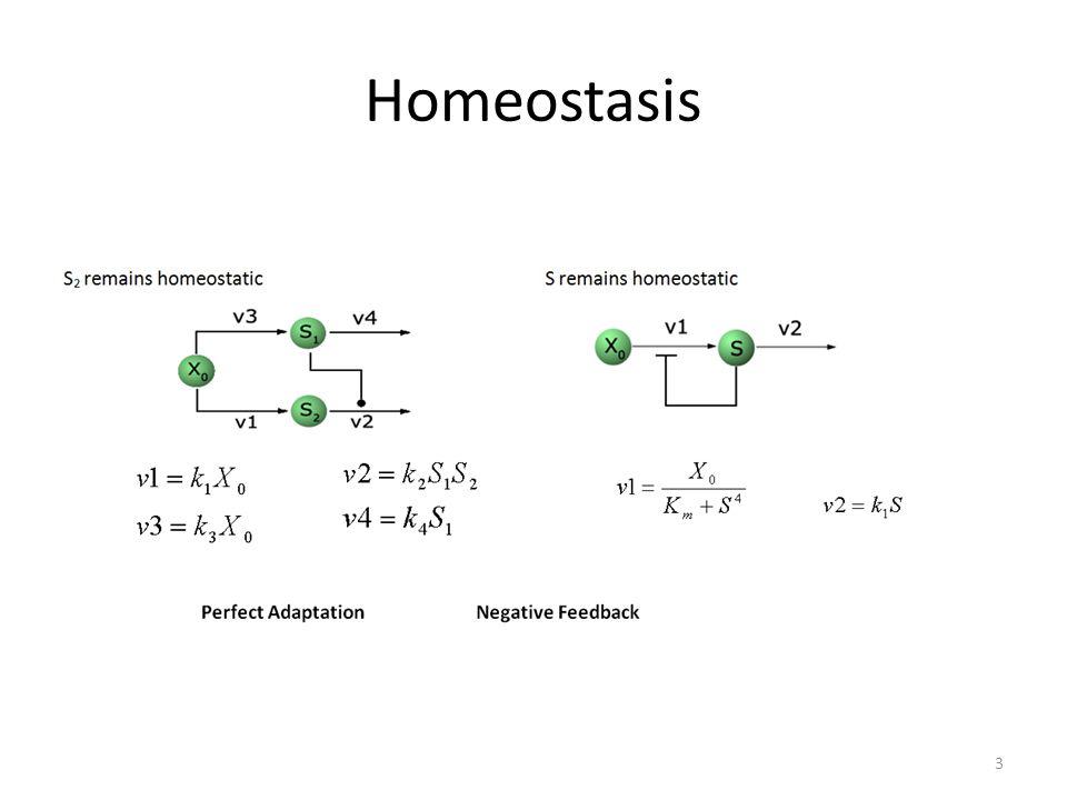 Homeostasis 3