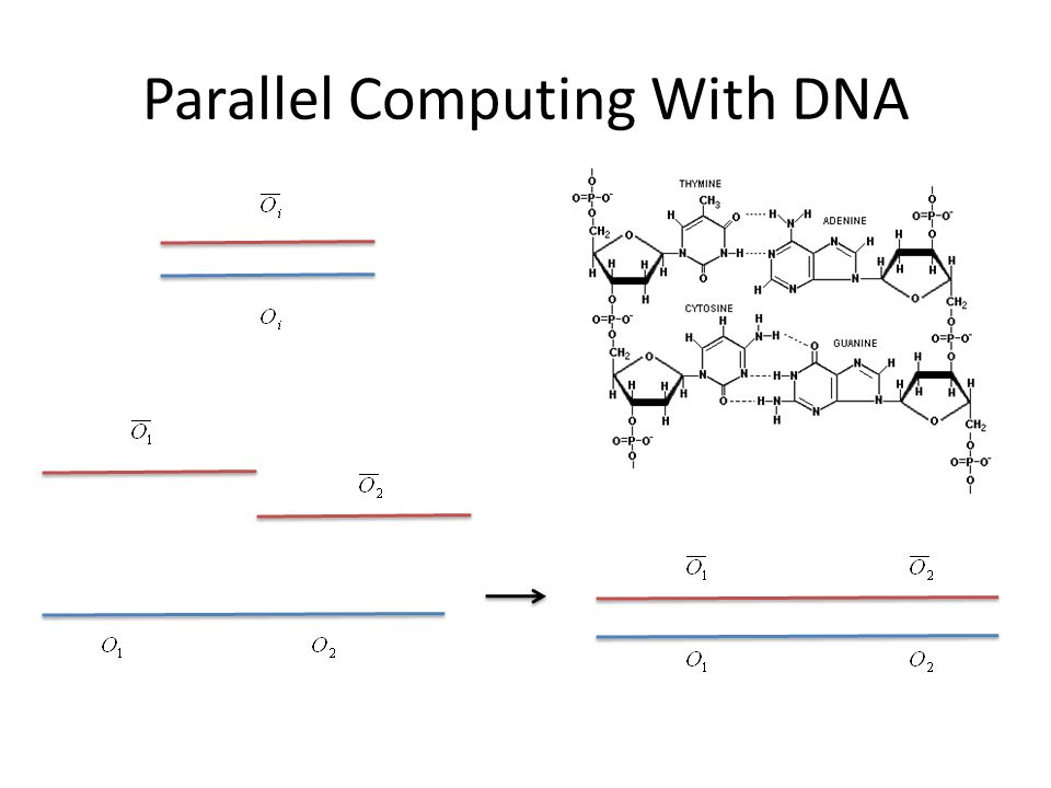 Parallel Computing With DNA
