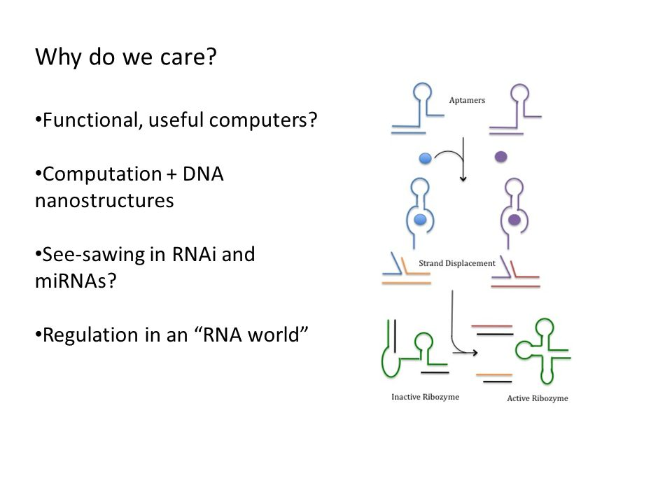 """Why do we care? Functional, useful computers? Computation + DNA nanostructures See-sawing in RNAi and miRNAs? Regulation in an """"RNA world"""""""