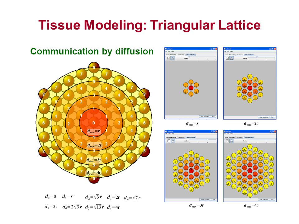 Tissue Modeling: Triangular Lattice CellExcite and Simulation Communication by diffusion