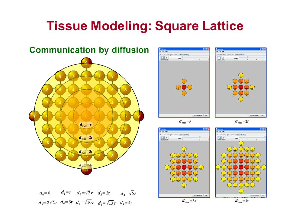 Tissue Modeling: Square Lattice CellExcite and Simulation Communication by diffusion