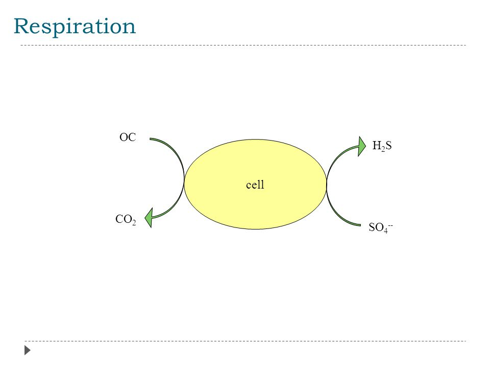 Respiration cell OC CO 2 SO 4 -- H2SH2S