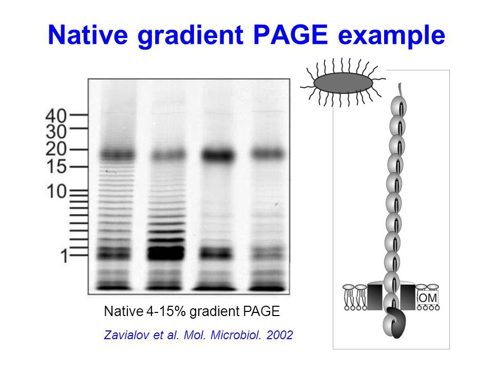Native gradient PAGE example Zavialov et al. Mol. Microbiol. 2002 Native 4-15% gradient PAGE