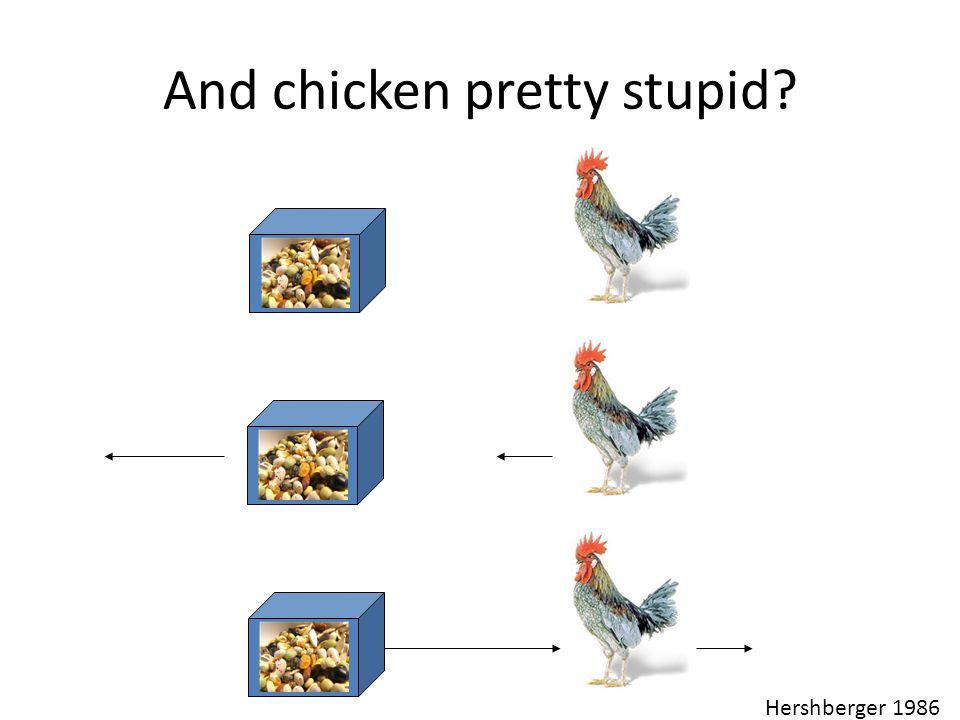 And chicken pretty stupid? Hershberger 1986