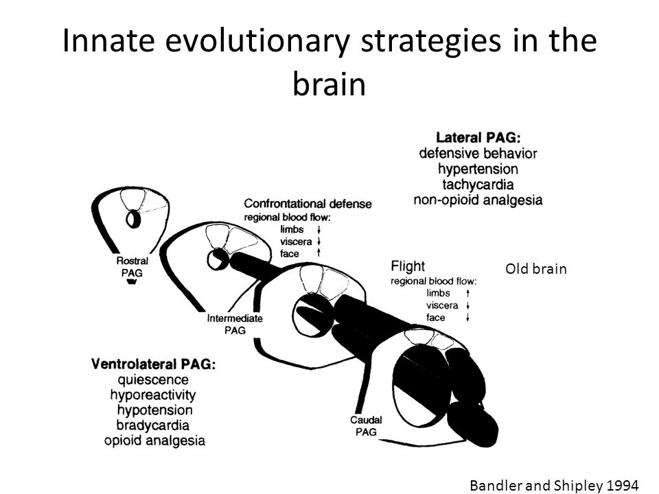 Innate evolutionary strategies in the brain Bandler and Shipley 1994 Old brain