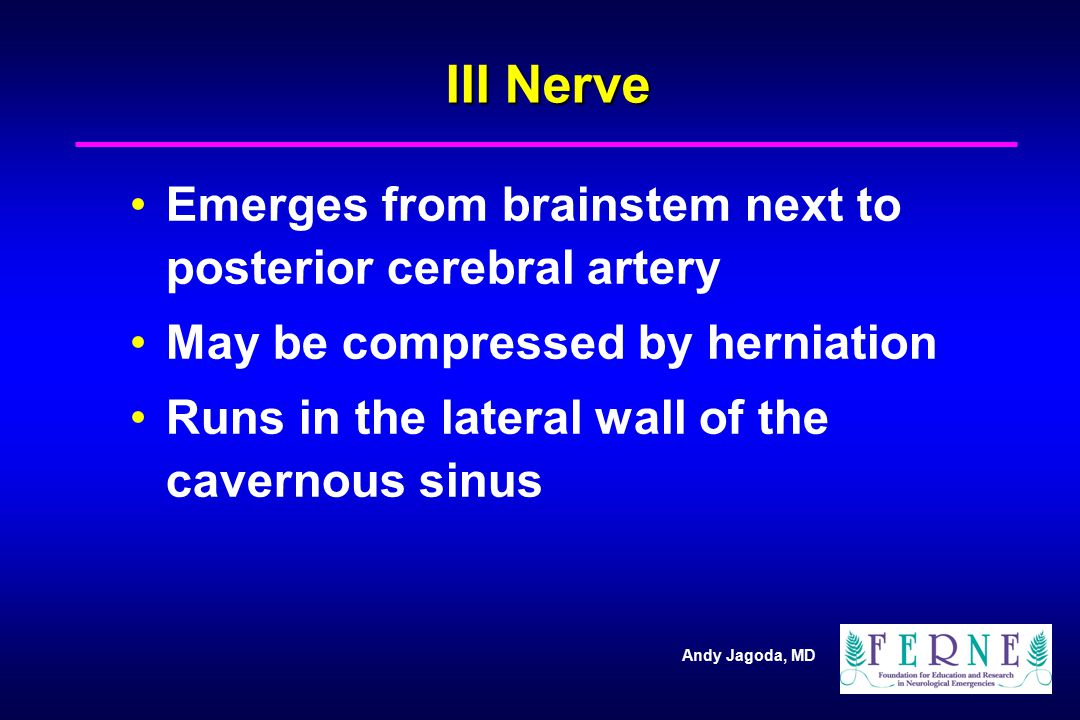 Andy Jagoda, MD III Nerve Emerges from brainstem next to posterior cerebral artery May be compressed by herniation Runs in the lateral wall of the cav