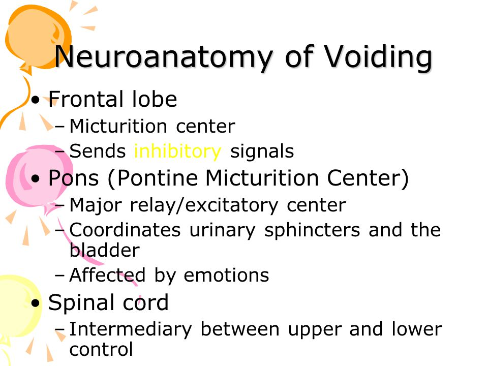 Frontal lobe –Micturition center –Sends inhibitory signals Pons (Pontine Micturition Center) –Major relay/excitatory center –Coordinates urinary sphin
