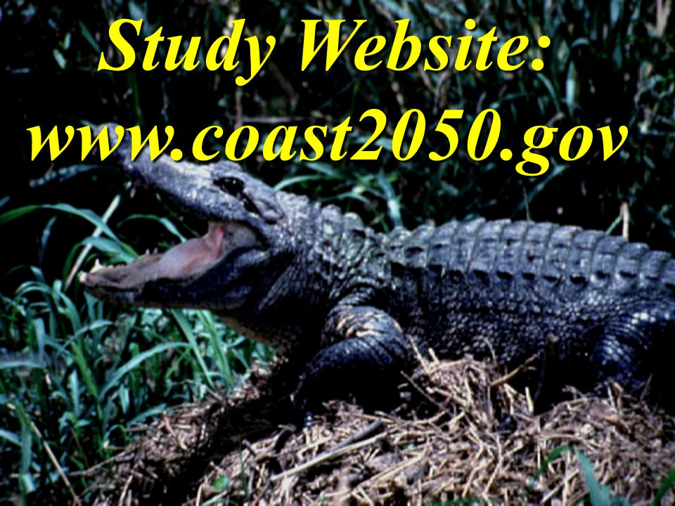 Study Website: www.coast2050.gov